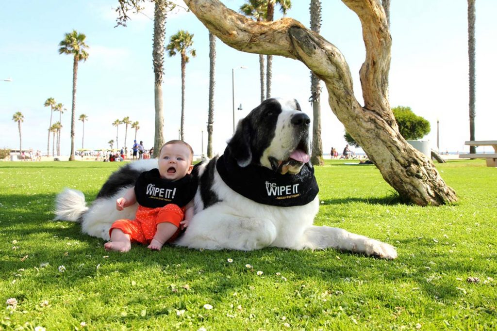 Protecting the Pets Who Protect Us