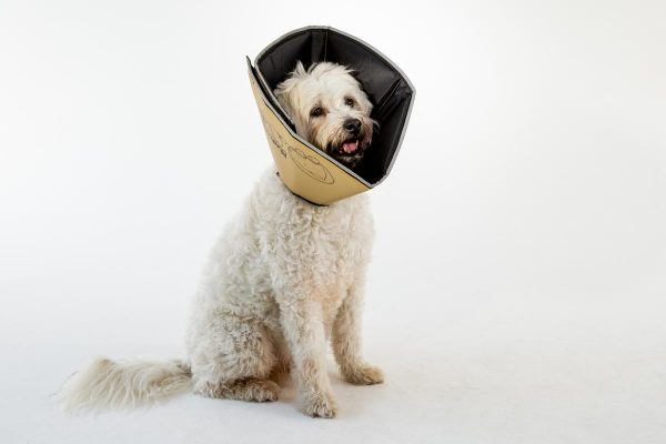 Comfy Cone Product Slideshow