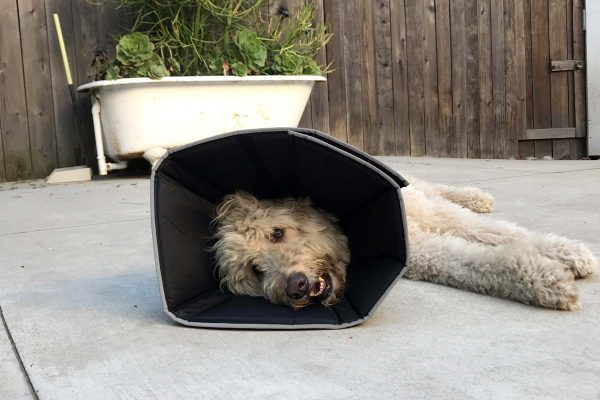 Now THAT'S a Comfy Cone!