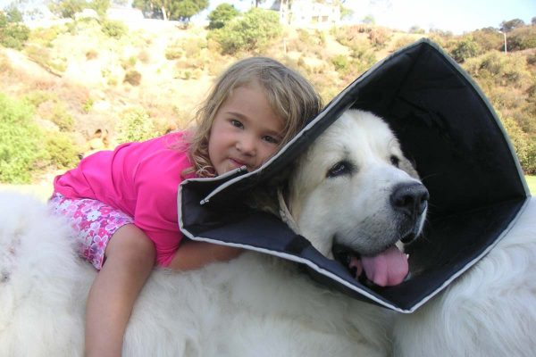 Comfy Cone, Flexible E-Collar for Dogs and Cats