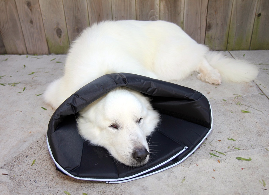 comfy cone folded back