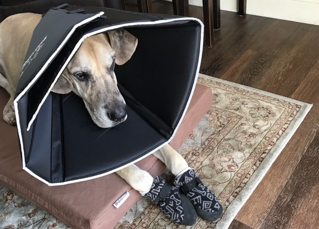 The Removable Stays Make the Comfy Cone Stronger
