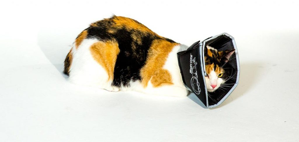 The Comfy Cone Is a Smart Solution for Cats, Too.